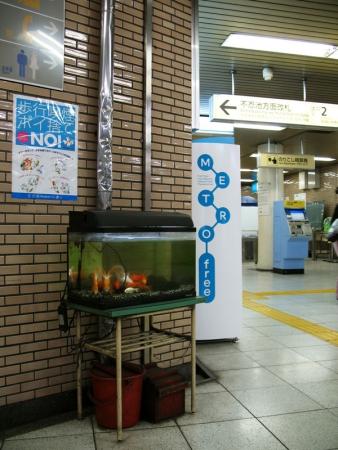 tokyo2_nezu_fishtank-712707