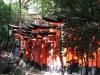 inari_taisha_torii_03-703091