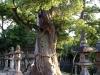 sumiyoshi_taisha_02-772764