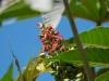 Nukus - Plants