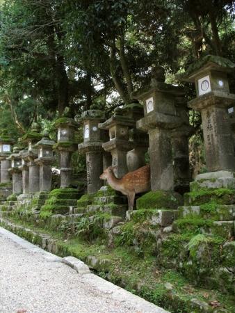 nara_kasuga_taisha_01-794871