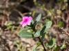 Nukus - Flowers
