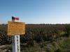 Road to Buchara - Cotton Field
