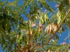 Buchara - Plants