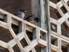 Samarkand - Starlings